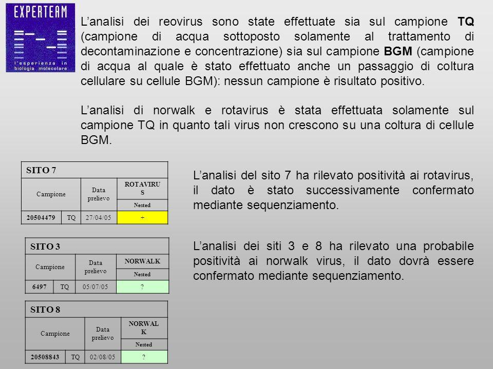 Lanalisi dei reovirus sono state effettuate sia sul campione TQ (campione di acqua sottoposto solamente al trattamento di decontaminazione e concentra