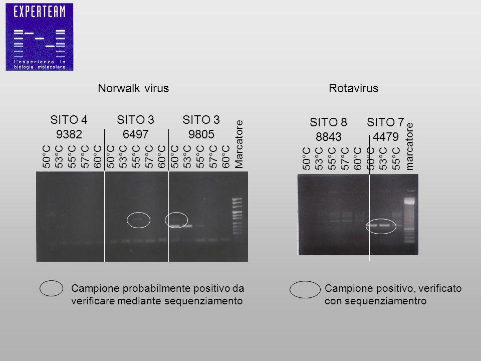 Norwalk virus Campione probabilmente positivo da verificare mediante sequenziamento 50°C 53°C 55°C 57°C 60°C 50°C 53°C 55°C 57°C 60°C 50°C 53°C 55°C 5