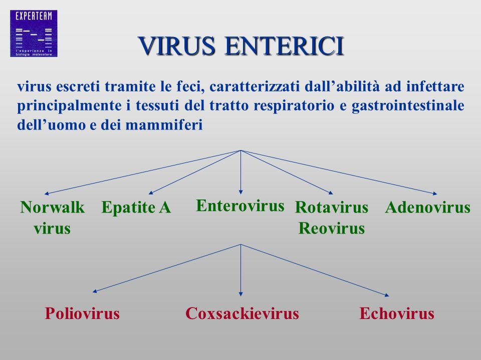 VIRUS ENTERICI PoliovirusEchovirusCoxsackievirus Rotavirus Reovirus Enterovirus Epatite ANorwalk virus Adenovirus virus escreti tramite le feci, carat