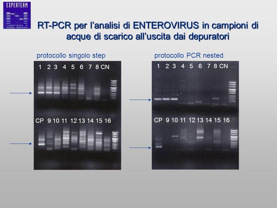 RT-PCR per lanalisi di ENTEROVIRUS in campioni di acque di scarico alluscita dai depuratori protocollo singolo stepprotocollo PCR nested 12345678CN CP