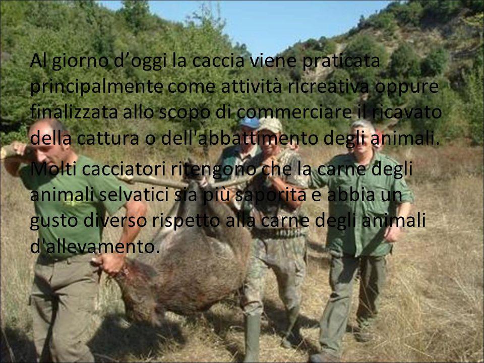 Al giorno doggi la caccia viene praticata principalmente come attività ricreativa oppure finalizzata allo scopo di commerciare il ricavato della cattu