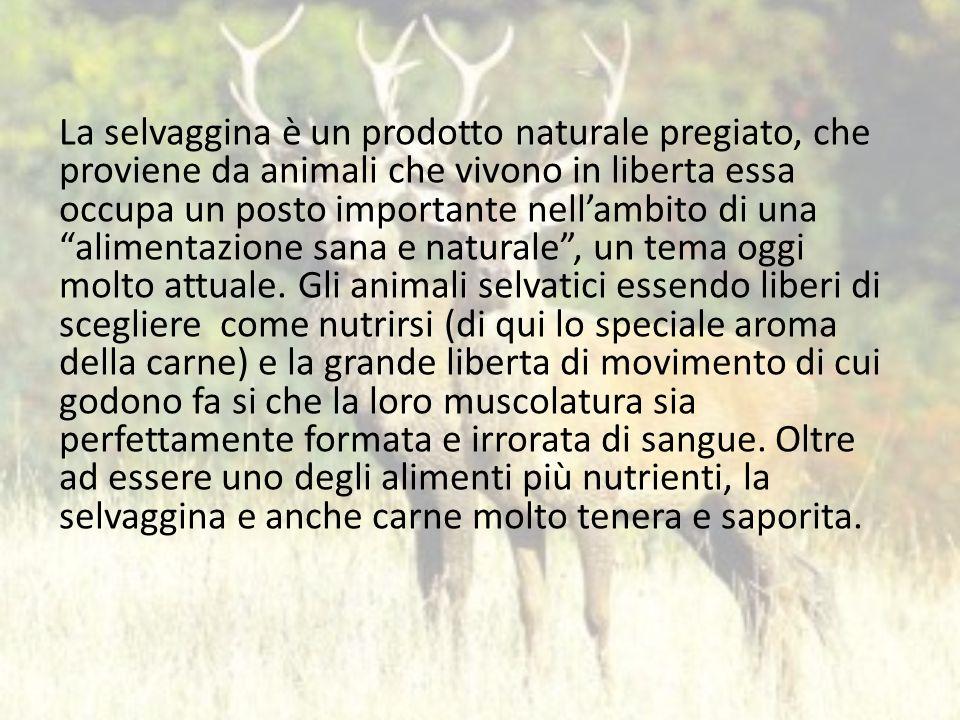 La selvaggina è un prodotto naturale pregiato, che proviene da animali che vivono in liberta essa occupa un posto importante nellambito di una aliment
