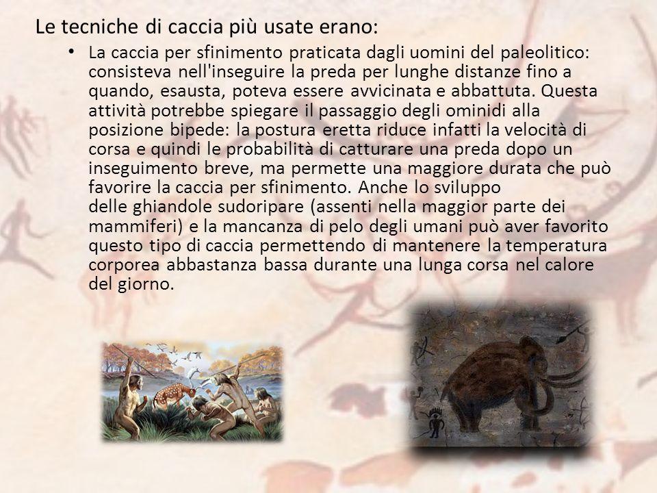 Le tecniche di caccia più usate erano: La caccia per sfinimento praticata dagli uomini del paleolitico: consisteva nell'inseguire la preda per lunghe