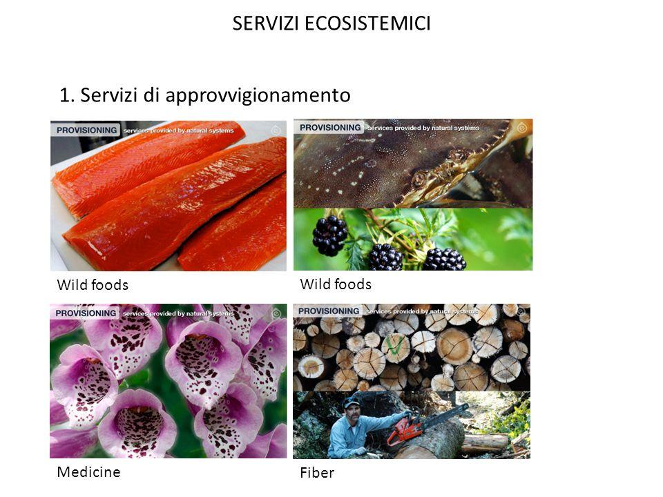 SERVIZI ECOSISTEMICI 1. Servizi di approvvigionamento Wild foods Fiber Medicine