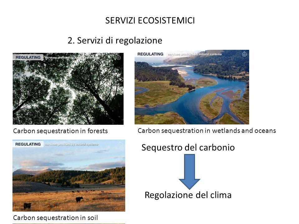 SERVIZI ECOSISTEMICI 2. Servizi di regolazione Sequestro del carbonio Regolazione del clima Carbon sequestration in forests Carbon sequestration in we