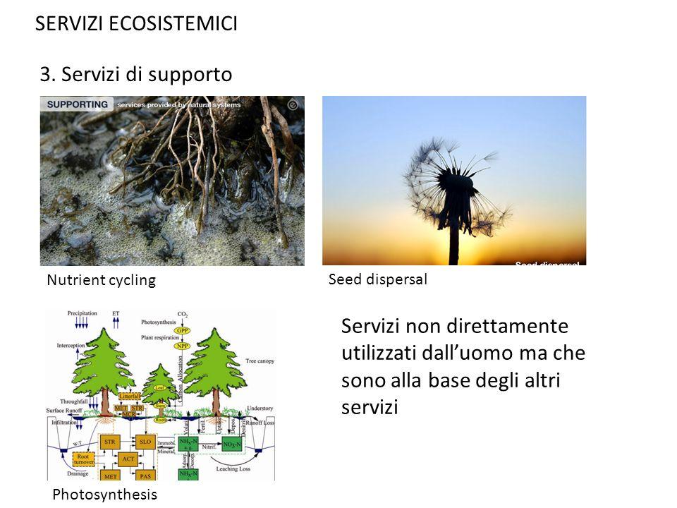 SERVIZI ECOSISTEMICI 3. Servizi di supporto Servizi non direttamente utilizzati dalluomo ma che sono alla base degli altri servizi Nutrient cycling Se