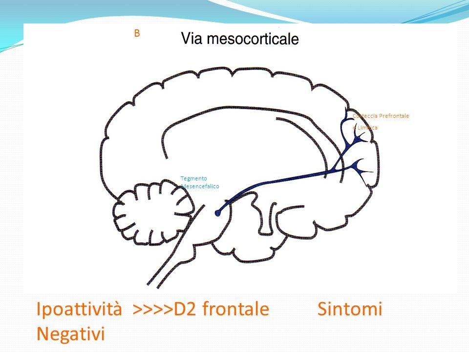 B Tegmento Mesencefalico Corteccia Prefrontale e Limbica Ipoattività >>>>D2 frontale Sintomi Negativi