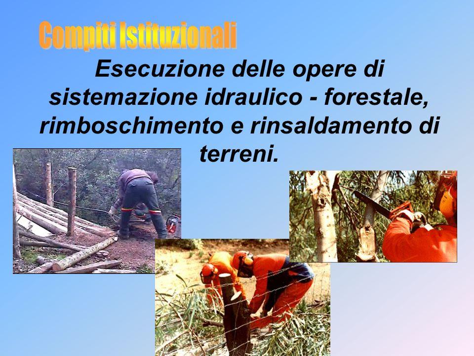 Esecuzione delle opere di sistemazione idraulico - forestale, rimboschimento e rinsaldamento di terreni.