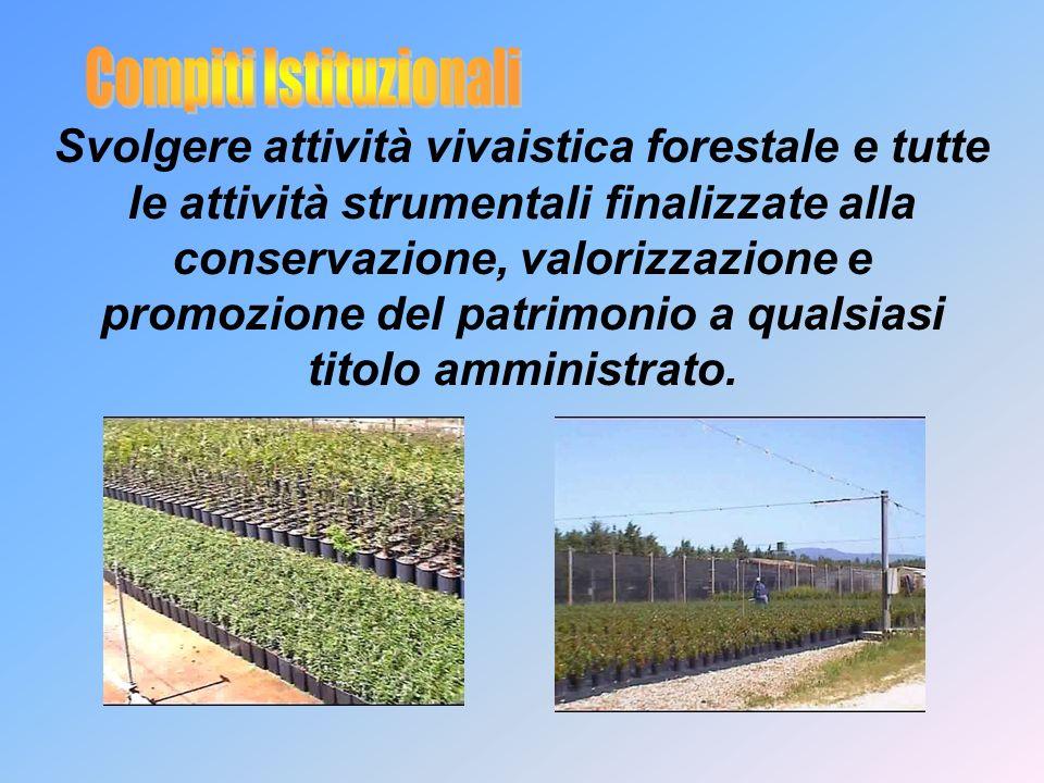 Svolgere attività vivaistica forestale e tutte le attività strumentali finalizzate alla conservazione, valorizzazione e promozione del patrimonio a qualsiasi titolo amministrato.