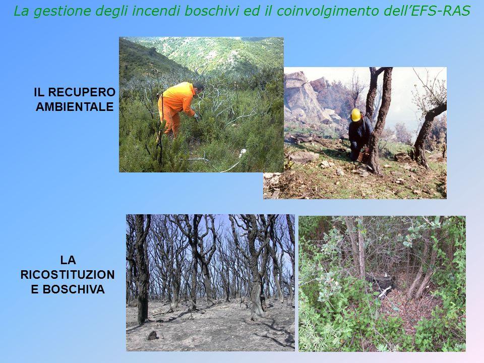 La gestione degli incendi boschivi ed il coinvolgimento dellEFS-RAS IL RECUPERO AMBIENTALE LA RICOSTITUZION E BOSCHIVA