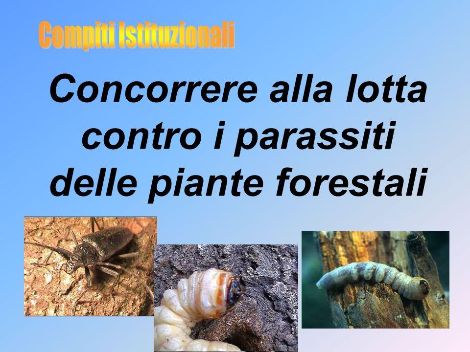 Concorrere alla lotta contro i parassiti delle piante forestali