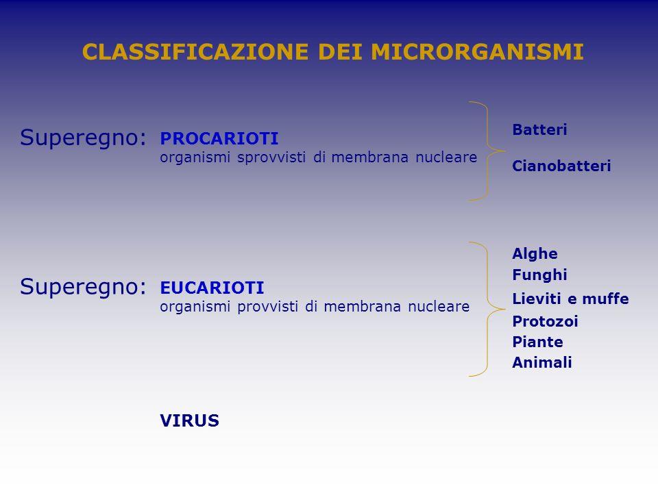 Superegno: PROCARIOTI organismi sprovvisti di membrana nucleare CLASSIFICAZIONE DEI MICRORGANISMI Superegno: EUCARIOTI organismi provvisti di membrana