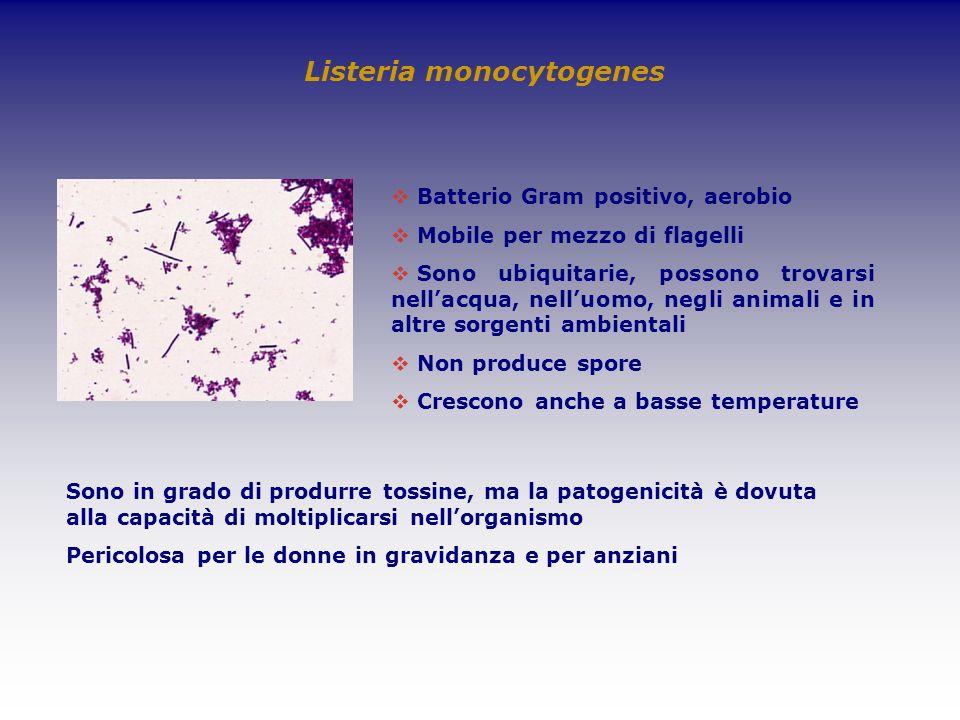 Listeria monocytogenes Batterio Gram positivo, aerobio Mobile per mezzo di flagelli Sono ubiquitarie, possono trovarsi nellacqua, nelluomo, negli anim