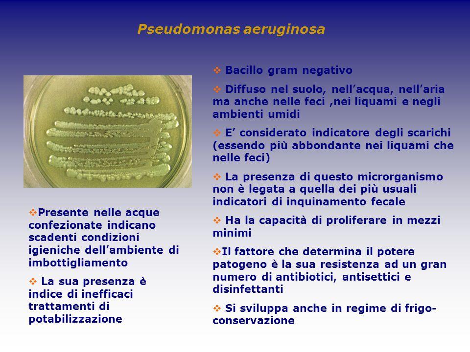Pseudomonas aeruginosa Bacillo gram negativo Diffuso nel suolo, nellacqua, nellaria ma anche nelle feci,nei liquami e negli ambienti umidi E considera