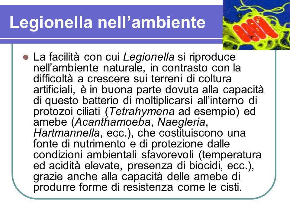 Legionella nellambiente La facilità con cui Legionella si riproduce nellambiente naturale, in contrasto con la difficoltà a crescere sui terreni di co