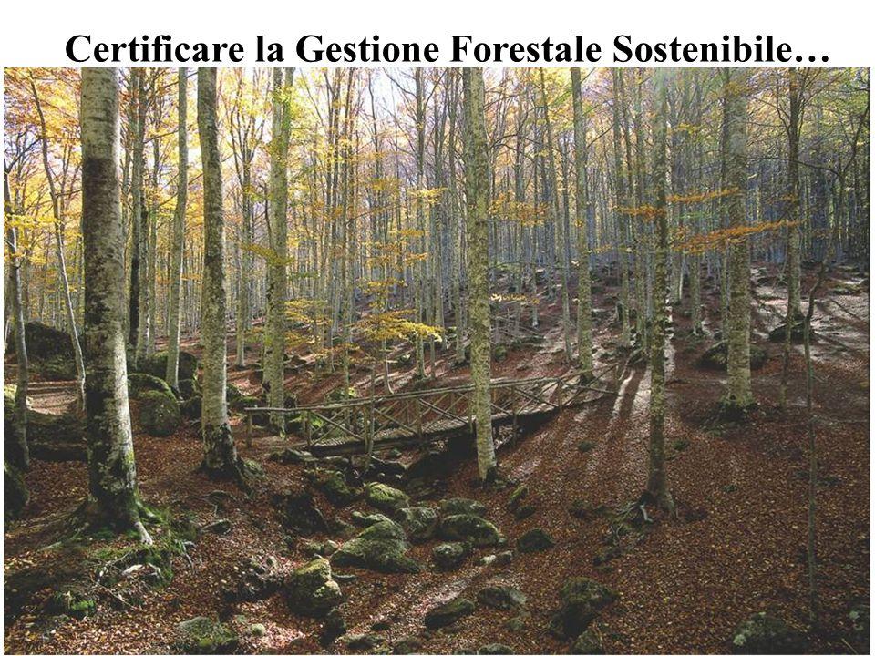 12 Certificare la Gestione Forestale Sostenibile…