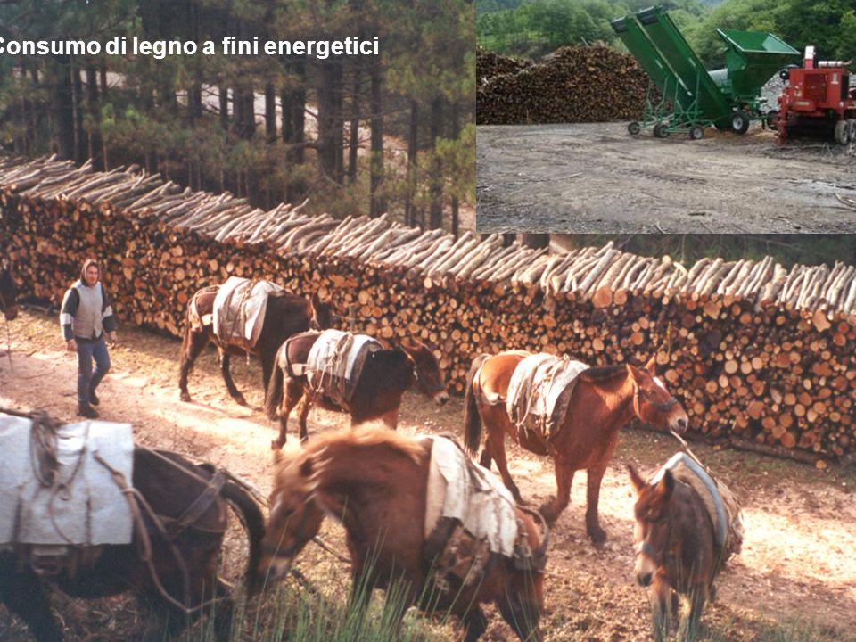 27 Consumo di legno a fini energetici