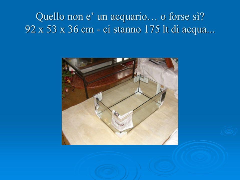 Quello non e un acquario… o forse sì? 92 x 53 x 36 cm - ci stanno 175 lt di acqua...