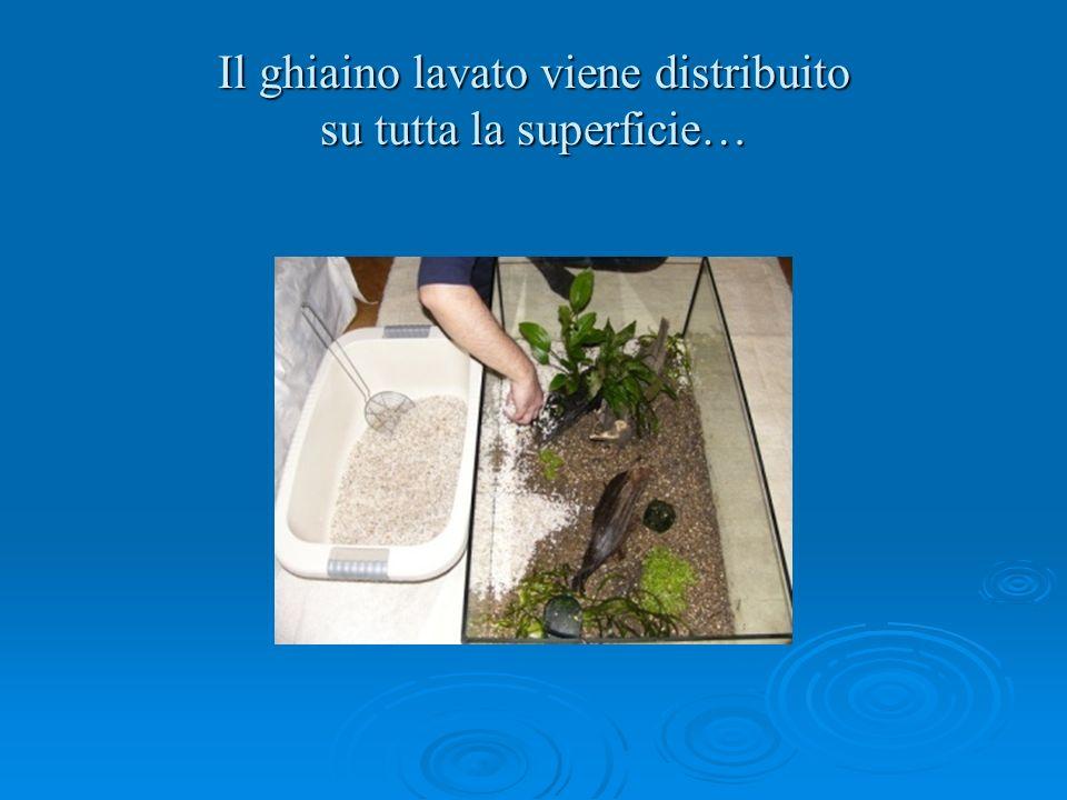Il ghiaino lavato viene distribuito su tutta la superficie…