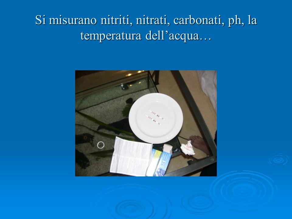 Si misurano nitriti, nitrati, carbonati, ph, la temperatura dellacqua…