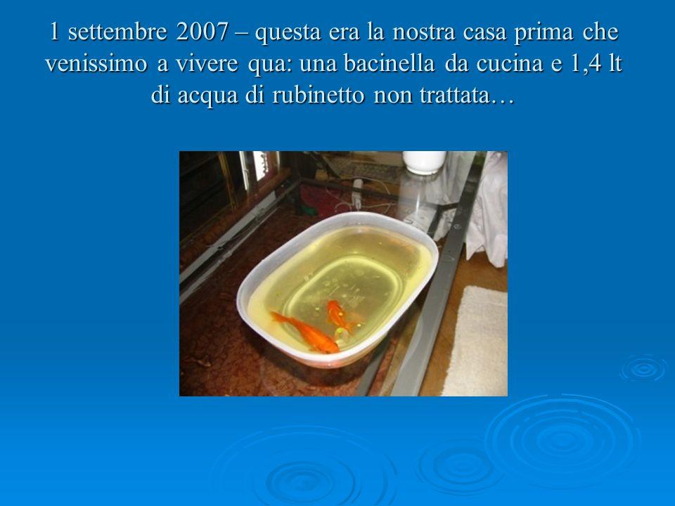 1 settembre 2007 – questa era la nostra casa prima che venissimo a vivere qua: una bacinella da cucina e 1,4 lt di acqua di rubinetto non trattata…