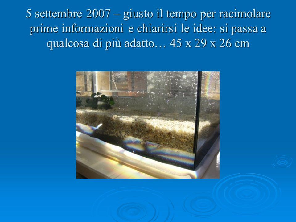 Adesso abbiamo 25 lt di acqua, finalmente una pianta e pure dei sassi.