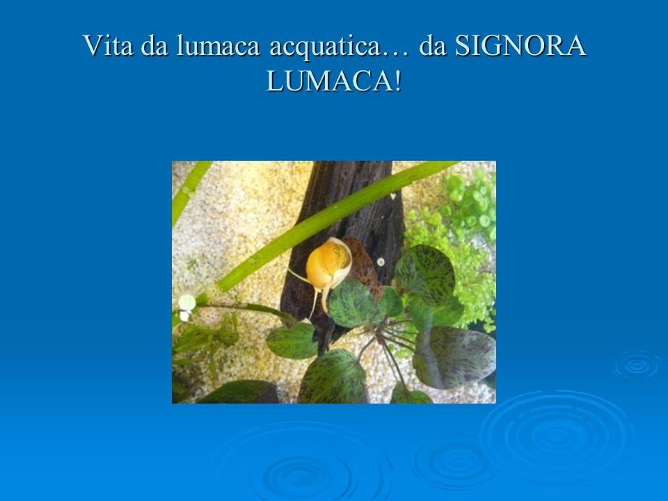Vita da lumaca acquatica… da SIGNORA LUMACA!
