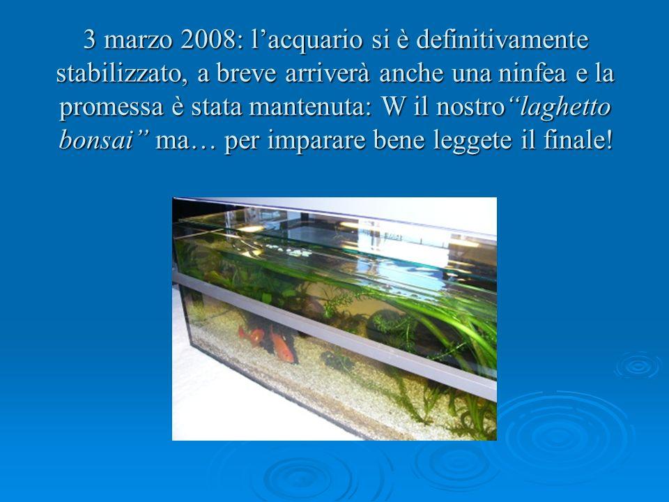 3 marzo 2008: lacquario si è definitivamente stabilizzato, a breve arriverà anche una ninfea e la promessa è stata mantenuta: W il nostrolaghetto bons