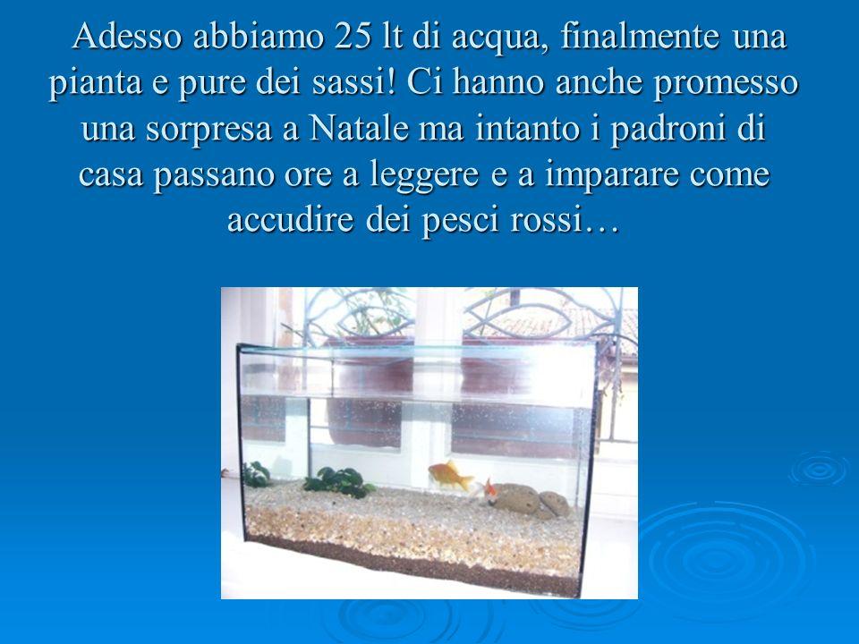 Adesso abbiamo 25 lt di acqua, finalmente una pianta e pure dei sassi! Ci hanno anche promesso una sorpresa a Natale ma intanto i padroni di casa pass