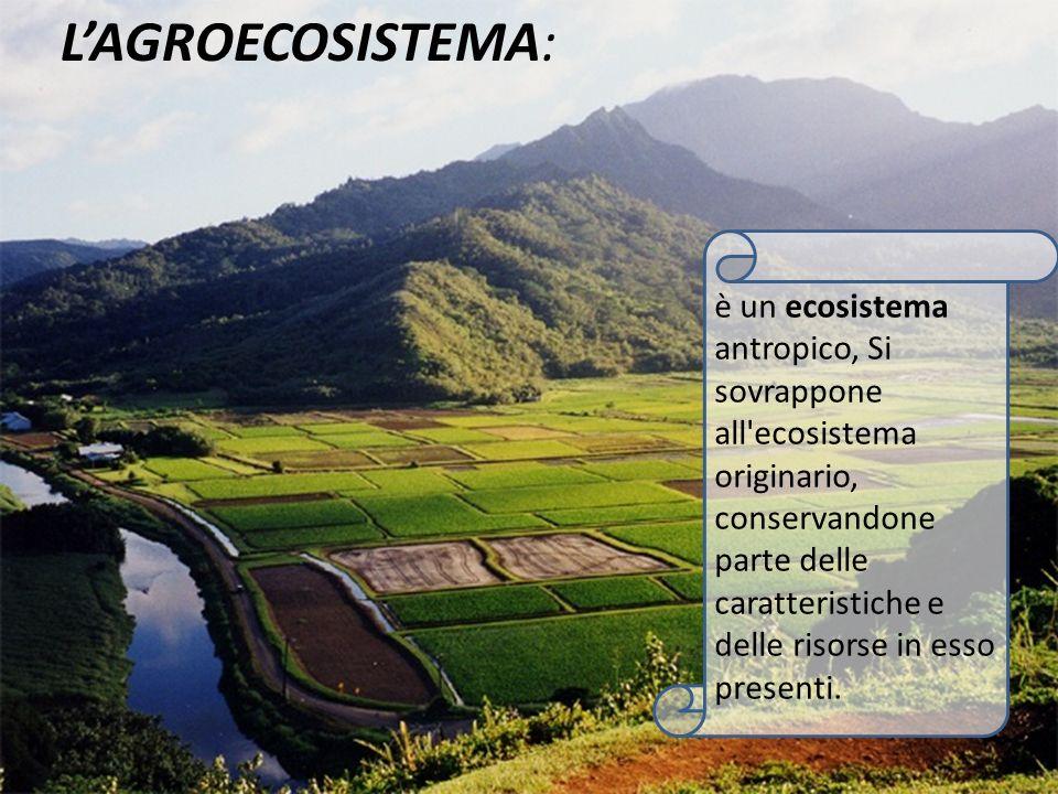 è un ecosistema antropico, Si sovrappone all'ecosistema originario, conservandone parte delle caratteristiche e delle risorse in esso presenti. LAGROE