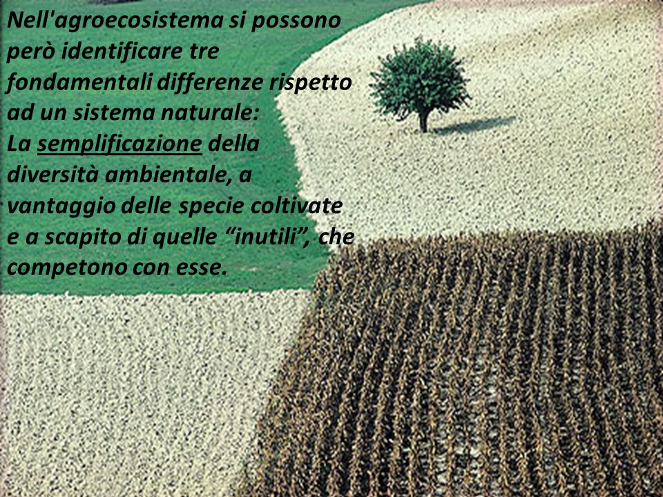 Nell'agroecosistema si possono però identificare tre fondamentali differenze rispetto ad un sistema naturale: La semplificazione della diversità ambie