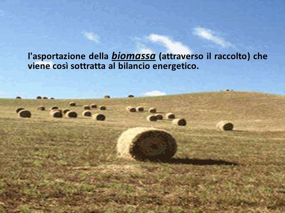 l'asportazione della biomassa (attraverso il raccolto) che viene così sottratta al bilancio energetico.
