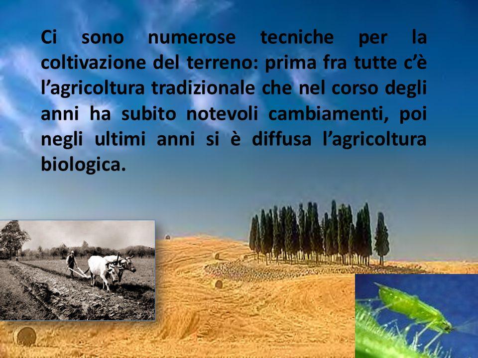 Ci sono numerose tecniche per la coltivazione del terreno: prima fra tutte cè lagricoltura tradizionale che nel corso degli anni ha subito notevoli ca