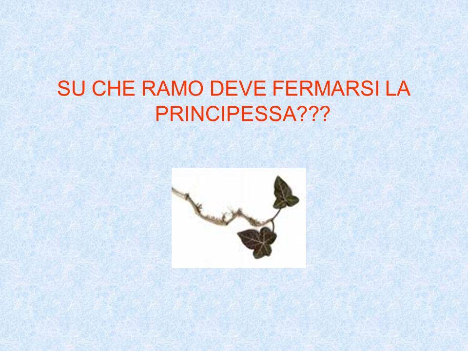 SU CHE RAMO DEVE FERMARSI LA PRINCIPESSA???