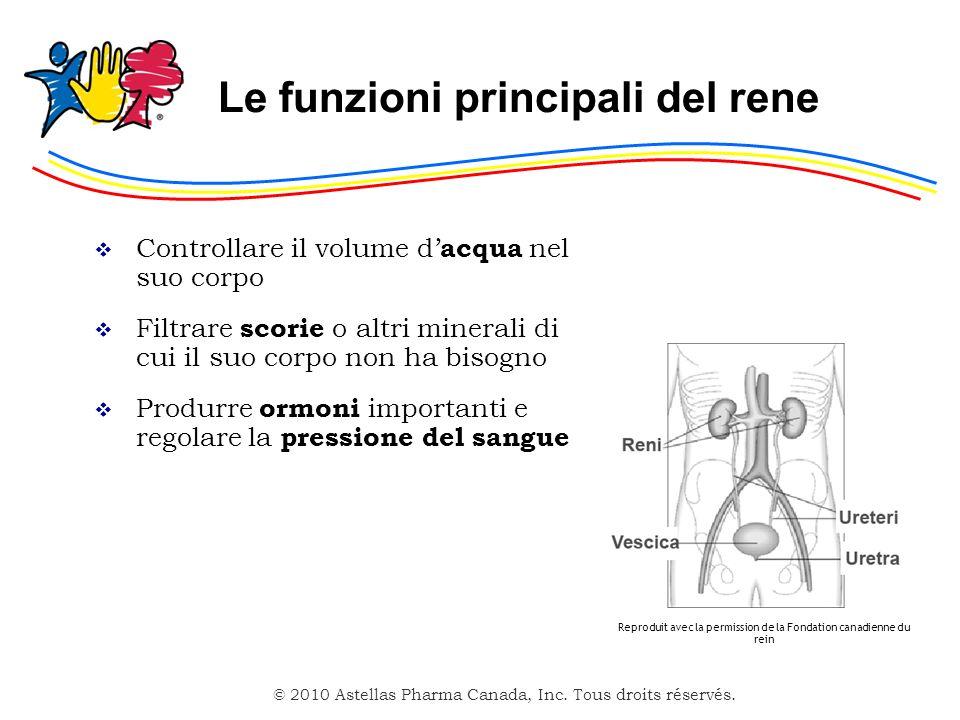 © 2010 Astellas Pharma Canada, Inc. Tous droits réservés. Le funzioni principali del rene Controllare il volume d acqua nel suo corpo Filtrare scorie