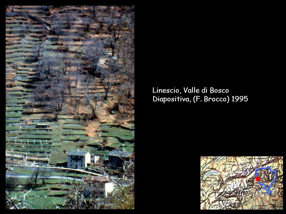 Collège Sismondi – F.Brocco / A. Cairoli - 2002 Linescio, Valle di Bosco Diapositiva, (F.