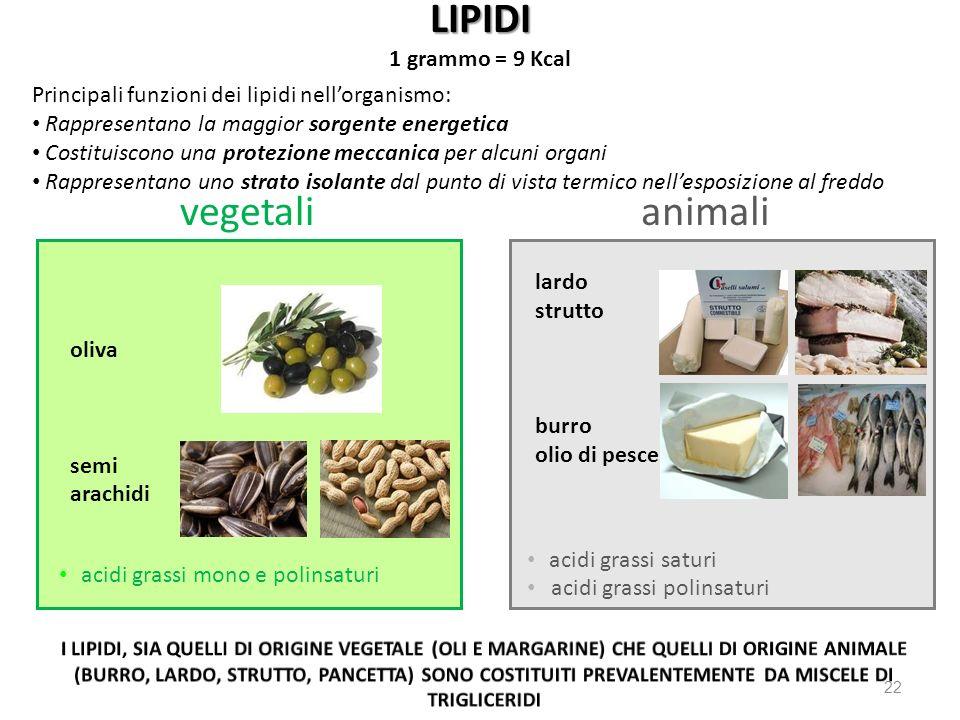 LIPIDI 1 grammo = 9 Kcal 22 Principali funzioni dei lipidi nellorganismo: Rappresentano la maggior sorgente energetica Costituiscono una protezione me