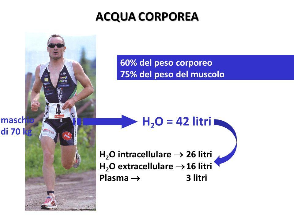 ACQUA CORPOREA H 2 O intracellulare 26 litri H 2 O extracellulare 16 litri Plasma 3 litri H 2 O = 42 litri maschio di 70 kg 60% del peso corporeo 75%
