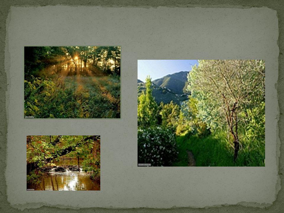 Per promuovere e sensibilizzare un atteggiamento di vero rispetto verso la natura, che collochi il bambino allinterno di una dimensione ecologica è stata portata avanti una proposta a carattere interdisciplinare dal titoloAmico albero: la vita è un albero, un albero è vita.