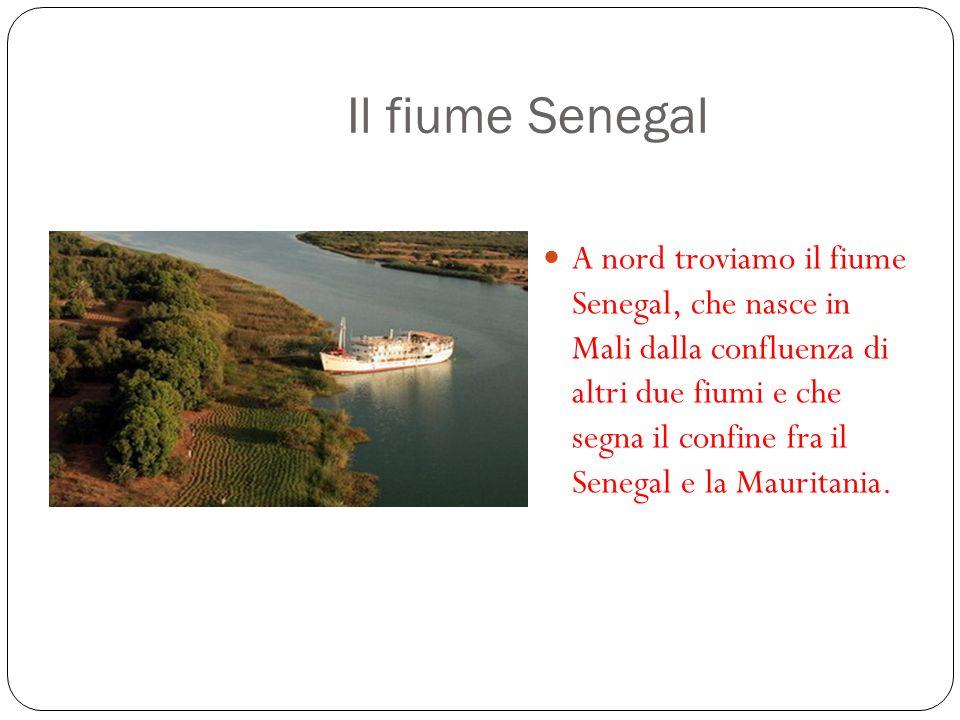 Il fiume Senegal A nord troviamo il fiume Senegal, che nasce in Mali dalla confluenza di altri due fiumi e che segna il confine fra il Senegal e la Ma