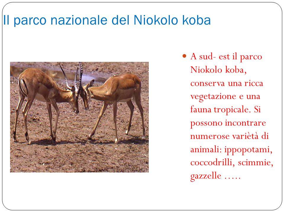 Il parco nazionale del Niokolo koba A sud- est il parco Niokolo koba, conserva una ricca vegetazione e una fauna tropicale. Si possono incontrare nume