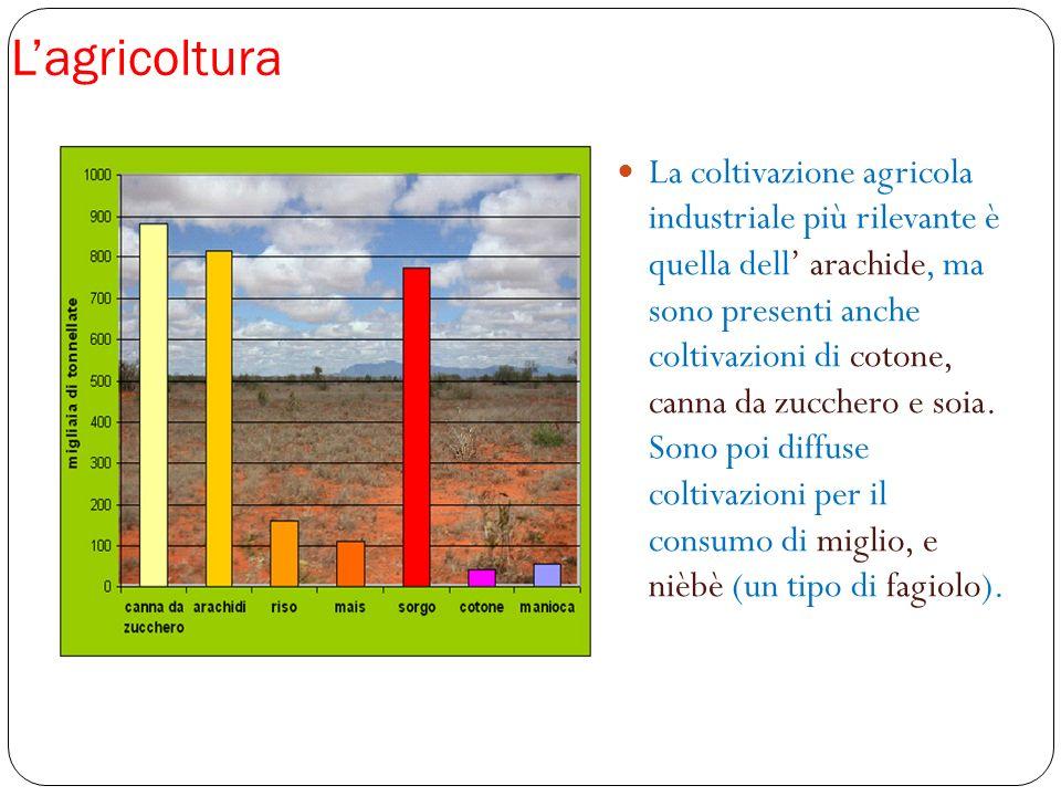 Lagricoltura La coltivazione agricola industriale più rilevante è quella dell arachide, ma sono presenti anche coltivazioni di cotone, canna da zucche