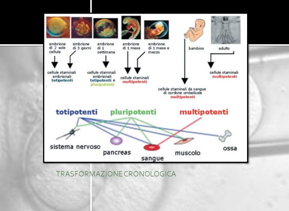 Le cellule staminali possono differenziarsi a seconda delle diverse tappe cronologiche dellindividuo: STAMINALI Totipotenti: questo tipo di cellule hanno la capacità di divisione e soprattutto ti poter dare inizio a qualsiasi linea cellulare compresi anche i foglietti extra embrionali.