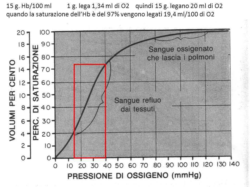 15 g. Hb/100 ml 1 g. lega 1,34 ml di O2 quindi 15 g. legano 20 ml di O2 quando la saturazione dellHb è del 97% vengono legati 19,4 ml/100 di O2
