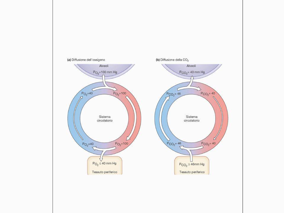 L intossicazione da monossido di carbonio Il CO presenta un affinità per l emoglobina 200-300 volte maggiore rispetto a quella per l ossigeno.