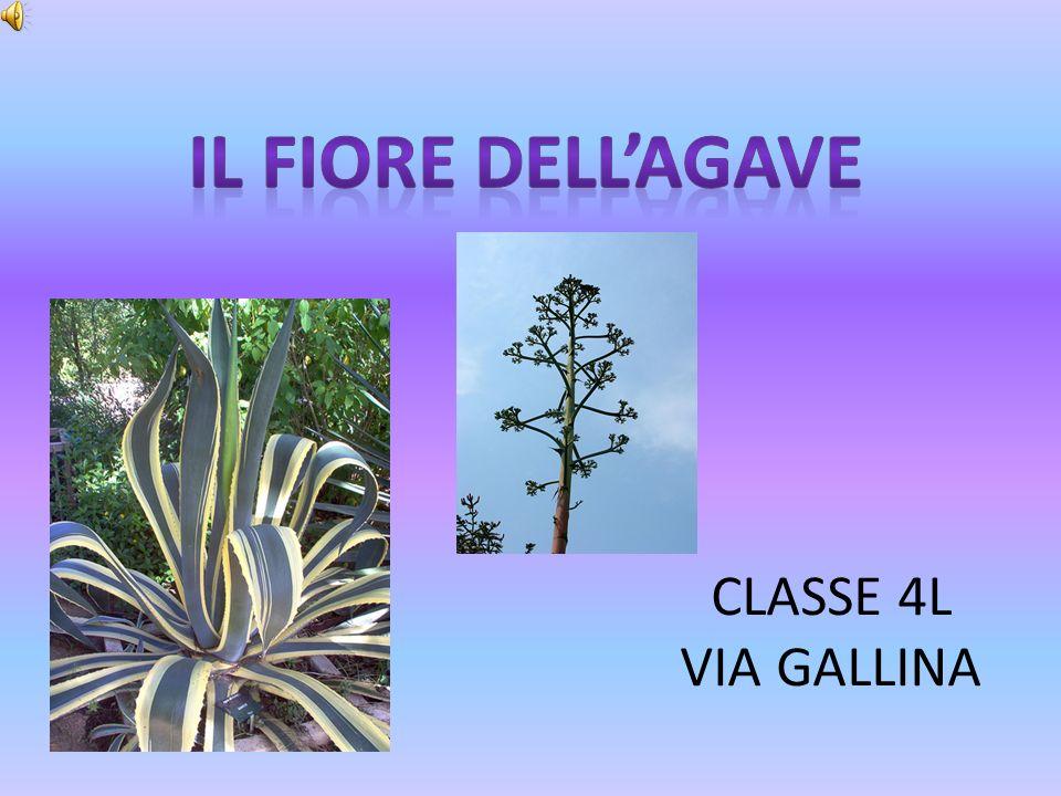 CLASSE 4L VIA GALLINA
