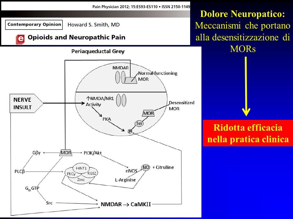 Dolore Neuropatico: Meccanismi che portano alla desensitizzazione di MORs Ridotta efficacia nella pratica clinica