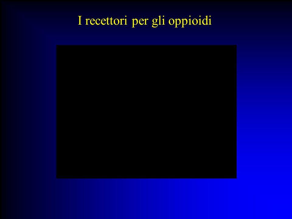 I recettori per gli oppioidi: binding