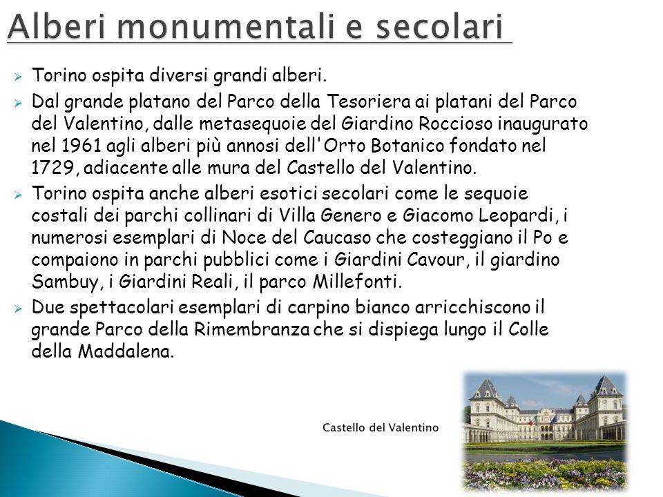 Torino ospita diversi grandi alberi. Dal grande platano del Parco della Tesoriera ai platani del Parco del Valentino, dalle metasequoie del Giardino R