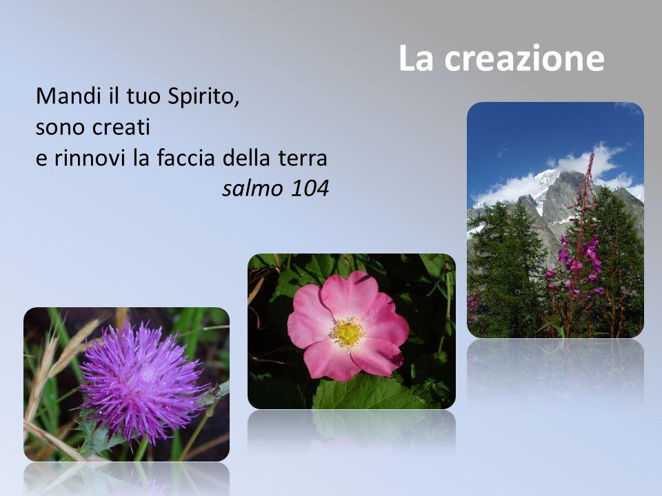 La creazione Mandi il tuo Spirito, sono creati e rinnovi la faccia della terra salmo 104